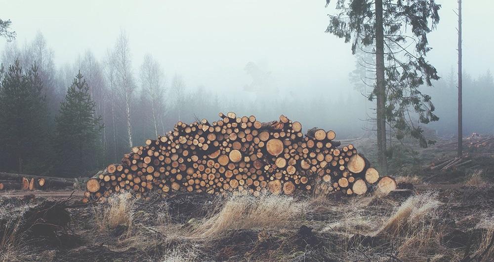 Bunch of Woods